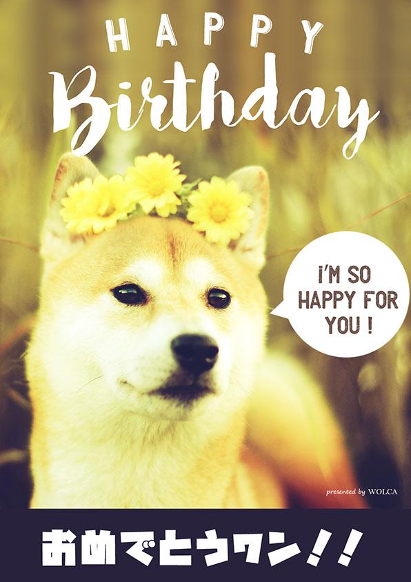 犬の誕生日画像