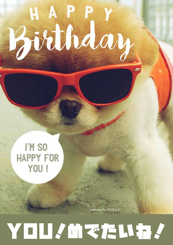 可愛い動物のおもしろ画像でお誕生日をお祝いしよう!